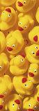 Quack, Quack III Prints by Dave Brullmann