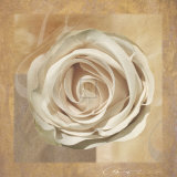 Warm Rose II Prints by Malcom Sanders