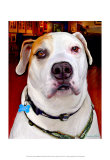 Sonny American Bulldog Print by Robert Mcclintock