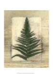 Texturized Fern I Print by Norman Wyatt Jr.