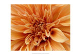 Graphic Dahlia I Posters by Rachel Perry