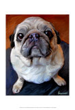 Pug on a Rug Posters by Robert Mcclintock