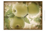 Vintage Apples II Prints by Jason Johnson