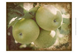 Vintage Apples III Prints by Jason Johnson