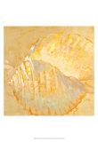 Shoreline Shells IV Kunstdrucke von Lorraine Vail