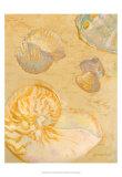 Shoreline Shells VI Kunstdrucke von Lorraine Vail
