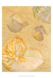 Shoreline Shells VI Prints by Lorraine Vail