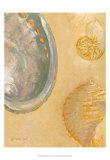 Shoreline Shells V Kunstdruck von Lorraine Vail