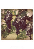 Vintage Grape Vines III Print by Jason Johnson