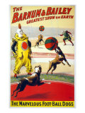 Clown Perform with the Marvelous Foot-Ball Dogs in the Barnum and Bailey Circus, 1900 Prints