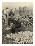 Farmer Collecting Husked Corn to Load into a Horse Drawn Wagon in Washington County, Maryland, 1937 Print by Arthur Rothstein