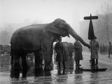 Elephant, and Stop Sign on a Wet Day, December 5, 1923 Posters