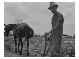 Son of Sharecropper Family at Work Cultivating a Cotton Field, Chesnee, South Carolina, June 1937 Billeder af Dorothea Lange