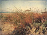 Sand Dunes II Prints by Amy Melious