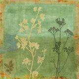 Eco-Floral I Prints by Chris Donovan