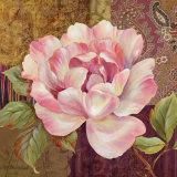 Esperance Rose Affiche par Pamela Gladding