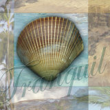 Tranquil Shell Prints by Todd Williams