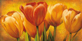 Bouquet of Orange Tulips Prints by David Pedersen