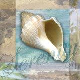 Serenity Shell Lámina por Todd Williams