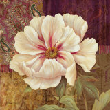 Esperance Peony Prints by Pamela Gladding
