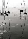 Tall Reeds Reflected Poster von David Gray