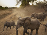 A remote camera captures elephants heading toward the Salamat River Photographic Print by Michael Nichols