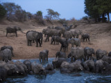 Elephants drink at the last remaining water hole during dry season Photographic Print by Michael Nichols
