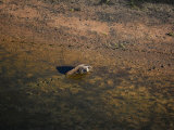 A giant anteater tracks its way along the shoreline of a lagoon Photographic Print by Bobby Haas