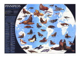 Pinnipeds Around The World Map 1987 Posters af National Geographic Maps