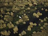 Horses grazing in lush marshland near San Rafael Photographic Print by Bobby Haas