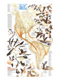 1979 Bird Migration in the Americas Map Poster di  National Geographic Maps