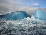 Chinstrap penguins rest atop a blue iceberg near Candlemas Island Photographic Print by Maria Stenzel