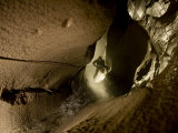 A caver drops down the entrance shaft to McBride Cave Photographic Print by Stephen Alvarez