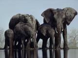 A herd of elephants drink from a water hole in Etosha National Park Photographic Print by Des & Jen Bartlett