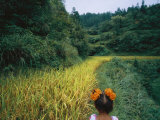 A young girl wanders the rice fields outside a village. Photographic Print by Lynn Johnson