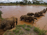 An elephant matriarch leads her group across a river Photographic Print by Michael Nichols