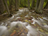 Jackson creek, running over stones through a cedar forest Photographic Print by Michael Melford