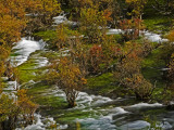 Shuzheng Falls Spilling Past Autumn Colored Bushes Photographic Print by Michael S. Yamashita