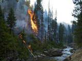 Trees torching along Payette River after fire burst through fire line Photographic Print by Mark Thiessen