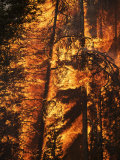 A crew burns out a portion of sub-alpine firs near Warm Lake Photographic Print by Mark Thiessen