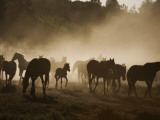 Protected Mustangs in the Morning Mist at the Wild Horse Sanctuary Photographic Print by Melissa Farlow