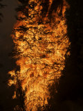 Six hundred acres of forest are destroyed by wildfire flames Photographic Print by Mark Thiessen