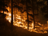 Forest fire caused by lightning in Custer State Park Photographic Print by Mark Thiessen