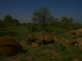 An elephant matriarch sleeping among her family. Photographic Print by Michael Nichols