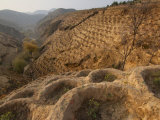 Date tree restoration in the Loess Plateau Photographic Print by Jim Richardson