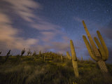 Saguaro cactuses reach toward the stars in an Arizona desert Photographic Print by Jim Richardson