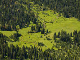Looking down on mountain meadow from Rowe Lakes Trail Photographic Print by Michael Melford