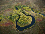 Salmon spawn in Kronotsky Nature Reserve's clear running rivers Photographic Print by Michael Melford