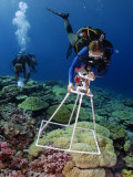 An ecologist deploys a photoquadrat frame above lobe coral Photographic Print by Brian J. Skerry