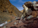 A snow leopard marks its trail by rubbing its scent on a rock Photographic Print by Steve Winter